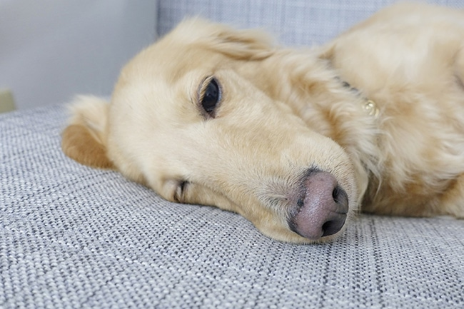 犬がおもちゃで遊んでくれない…。どうしたら良いの?