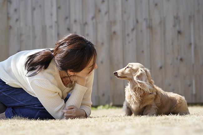 愛犬の狂犬病対策、病院での注射は必要?知っておきたいアレコレ