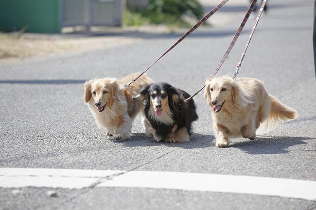 散歩中に歩いてくれない!そんなときの犬の気持ちって?