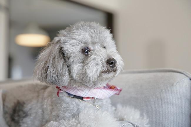 犬はレバーを食べられる?レバーを与えるメリット・デメリットや、レバーを使ったドッグフードレシピをご紹介!