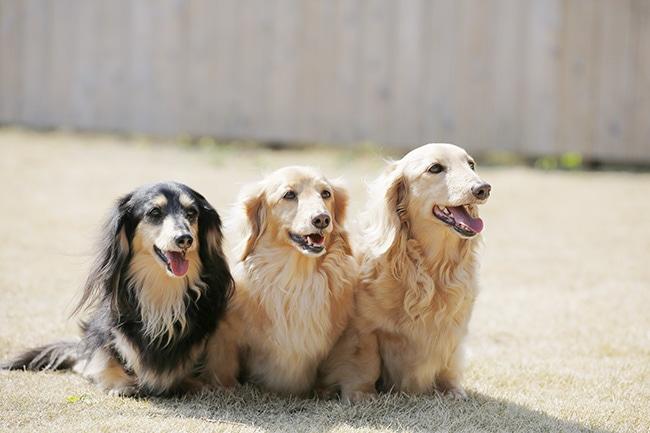 犬のワクチンの種類や病気との関連性を分かりやすく解説!