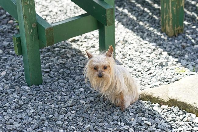 犬の熱中症の症状をご紹介。こんな症状にはご注意を!