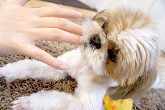 犬に噛まれた!重症になる前にきちんと対処法を知っておきましょう
