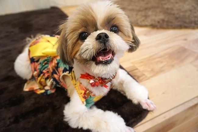 夏の季節、犬に服を着せることは必要?