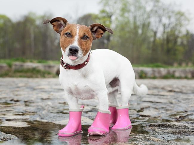 犬用のレインコートを手作りして、梅雨もお散歩を楽しもう!