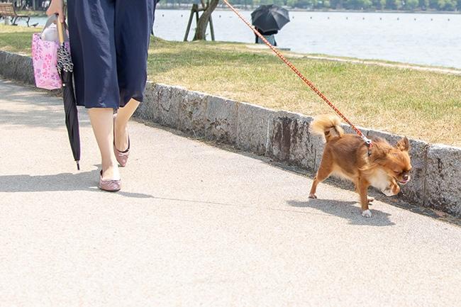 愛犬のリードの選び方に悩んでる方へ。選び方のポイントをご紹介!