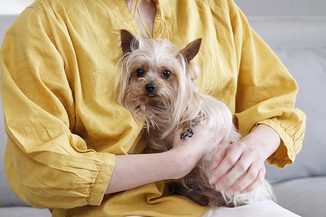 犬の分離不安症を知り、ストレスフリーな毎日にしてあげましょう