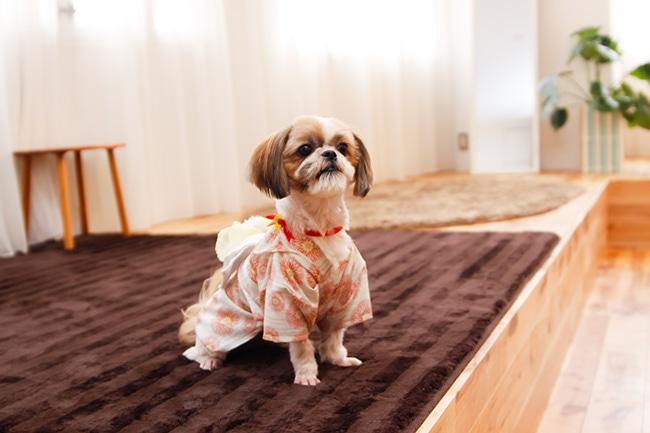 愛犬に浴衣を着せてもっと夏を楽しもう!