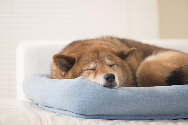 夏場、犬にとって必須のエアコン!気になる温度などを知っておこう!