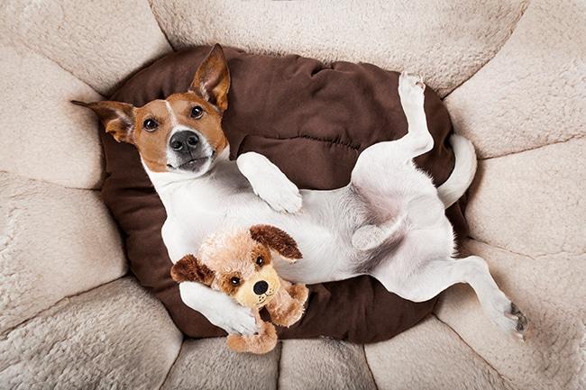 犬の夏用ベッドの選び方のポイントとおしゃれな人気のおすすめベッドのご紹介