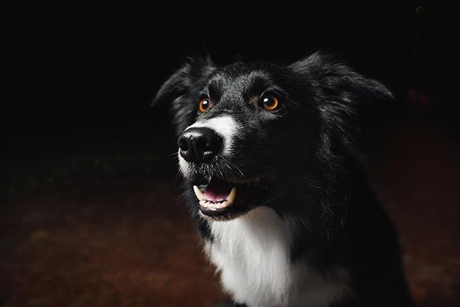 犬を夜に散歩させる際に心得ておきたい事とは?