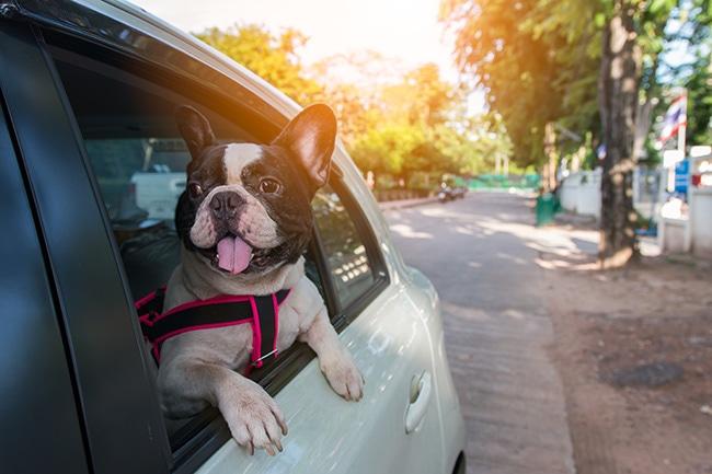 愛犬とのドライブをドライブボックスを使って安全に楽しく!