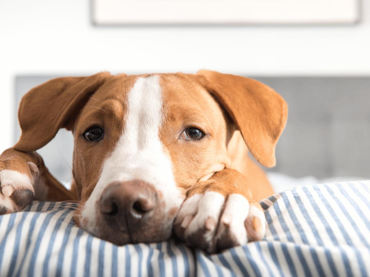 ドッグフードでアレルギー反応が出たときの症状は?アレルゲンの原因を特定する方法とおすすめのドッグフード