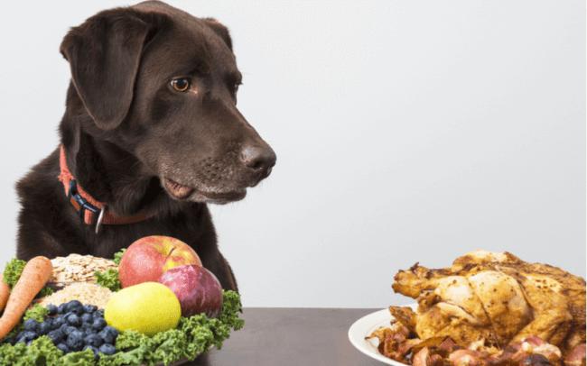 犬には味覚はあるの?餌を丸呑みするのは味覚障害?犬に味の好き嫌いがあるのか解説します