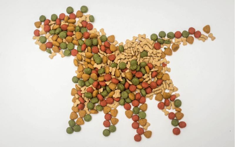 ドッグフードの栄養素を知って愛犬の健康を守ろう