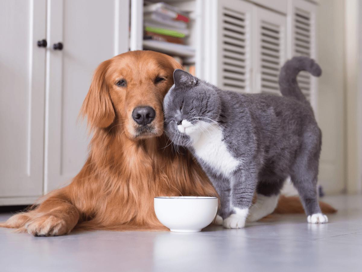 犬がキャットフードを食べたらどうなる?その症状・対策と飼い主さんが知っておくべきそれぞれのフードの違い