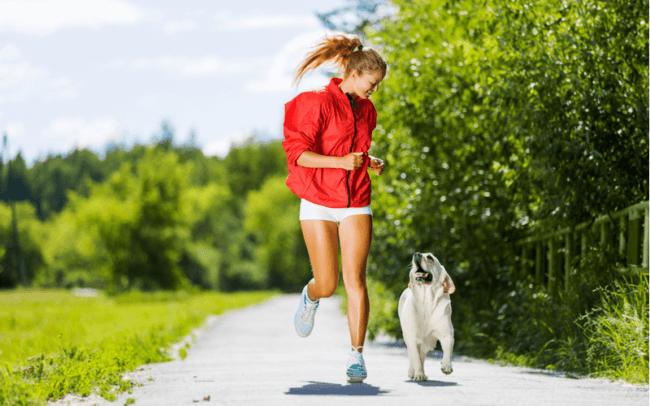 犬の肥満用のドッグフードはどのように選べばいいの?犬の肥満とドッグフードの関係を知って愛犬の健康を守ろう