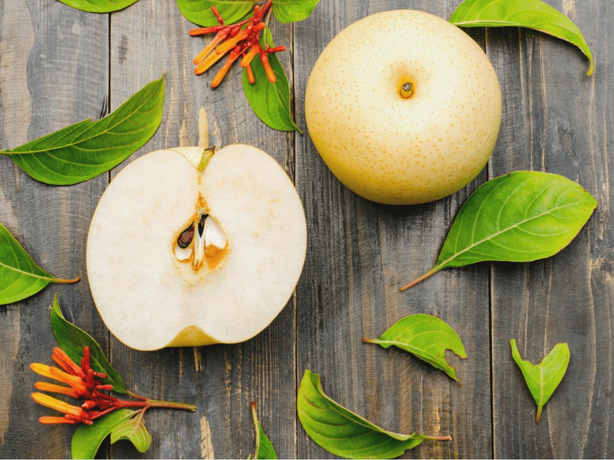 犬は梨を食べられる?愛犬も大好きな梨をあげるときの注意点と適量を知ろう