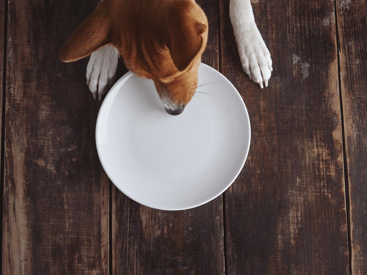 愛犬が偏食でドッグフードを食べない!その原因と治し方は?