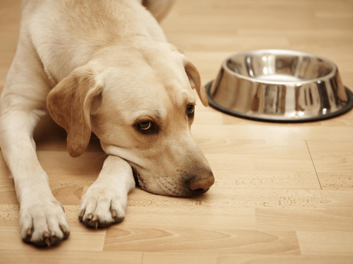 老犬がドッグフードを食べない4つの理由と食べなくなったときの注意点!おすすめのドッグフードも紹介