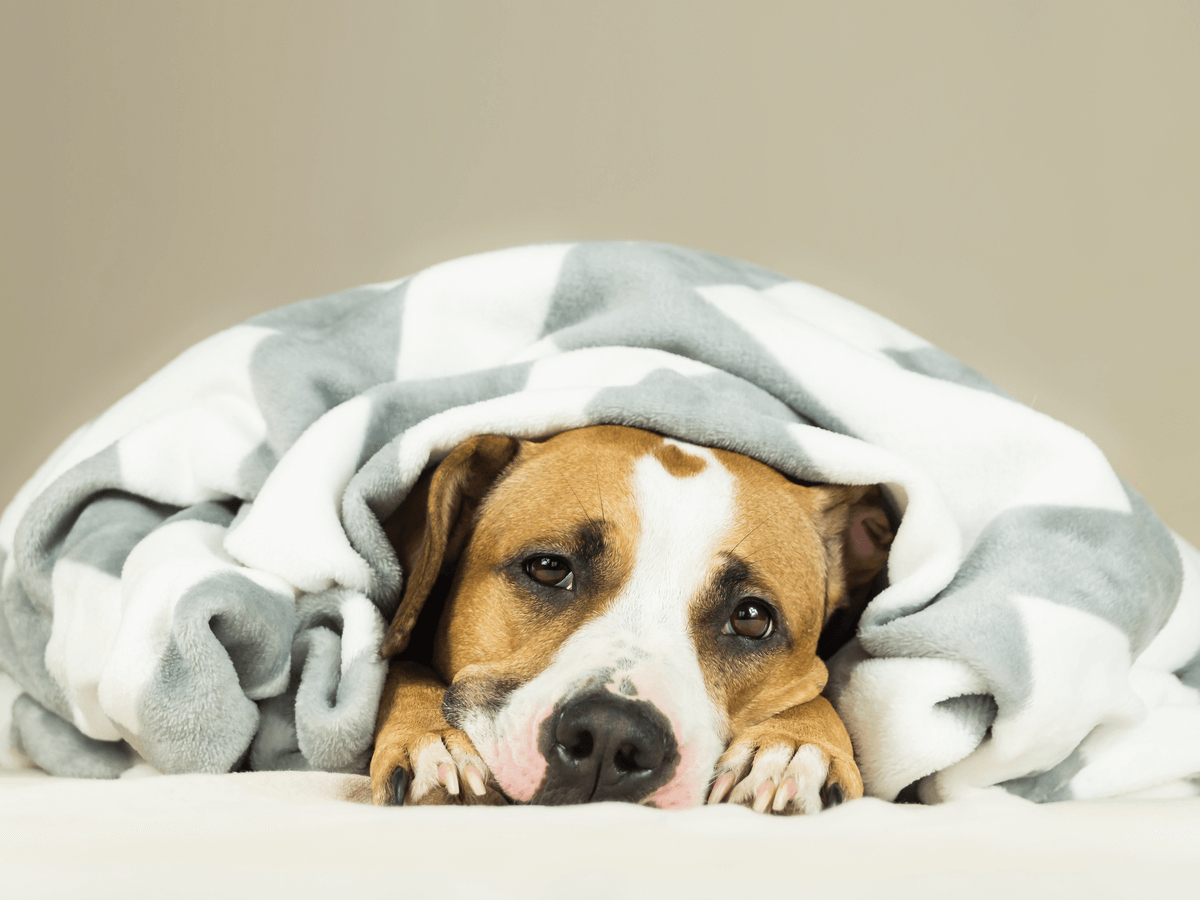 犬が玉ねぎを少量でも食べたら病院へ!スープやハンバーグを誤食しても危険な中毒症状