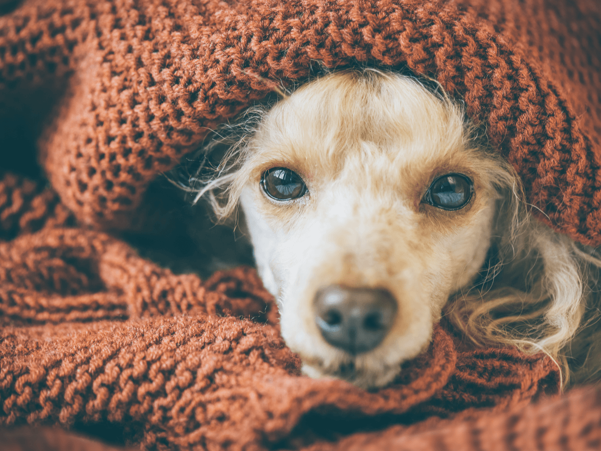 犬の寒さ対策のおすすめは?外飼いや室内飼い・費用別から考える冬の過ごし方