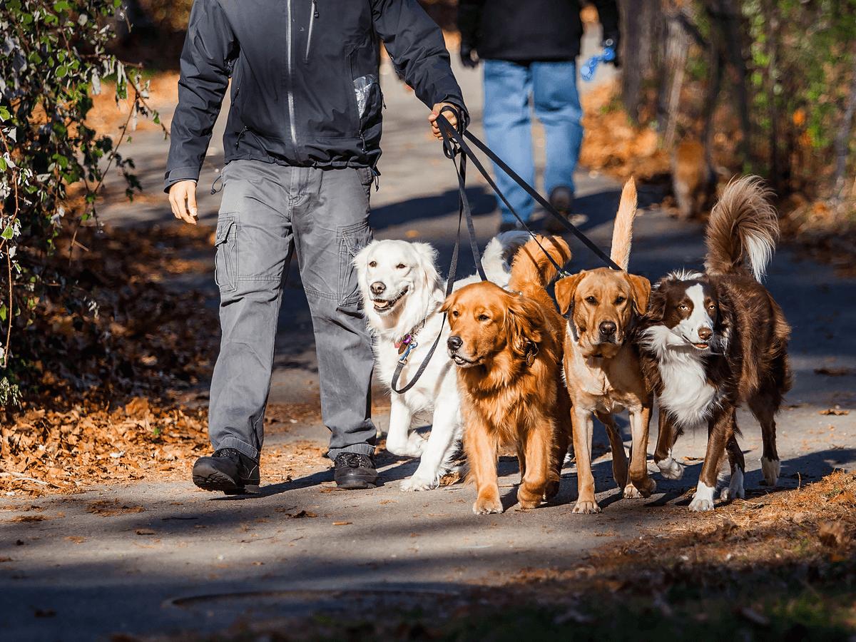 犬の多頭飼いで注意すべき3つのことと迎える前の準備やしつけ・散歩方法