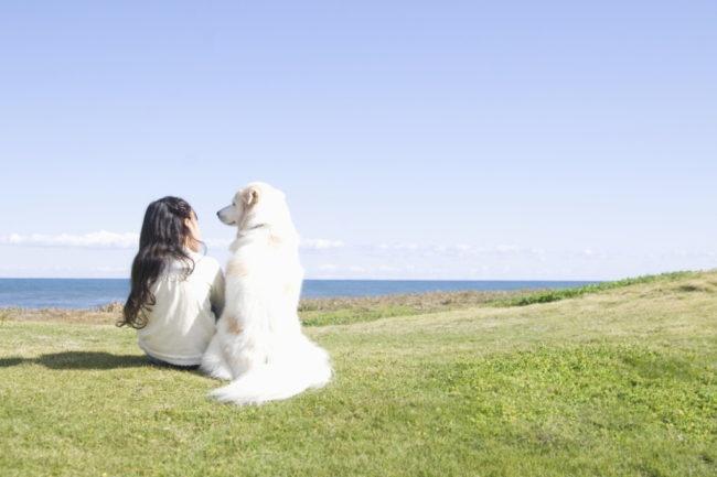 犬がなつく人の特徴は?なついてもらうコツも伝授します!
