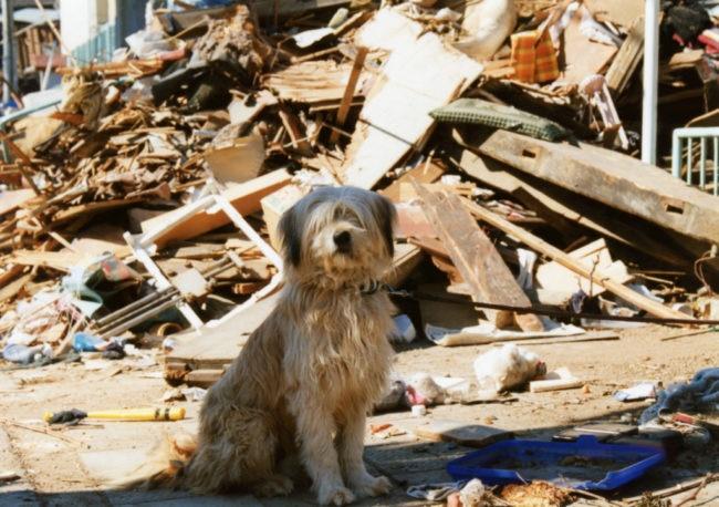 愛犬を地震から守りたい!今からできる準備と対策