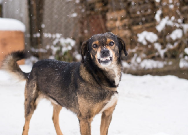 尻尾を振りながら興奮する犬の画像