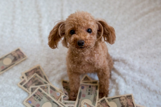 たくさんのお金と犬の画像