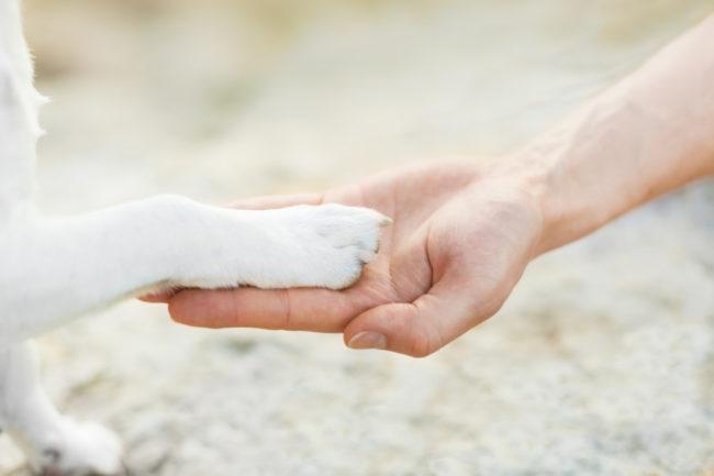 白い犬がお手をしている様子の画像